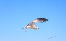 鸟飞行好地产的lanscape 库存照片