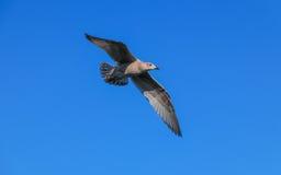 鸟飞行好地产的lanscape 图库摄影