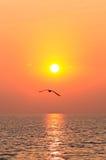 鸟飞行日落 库存图片