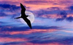 鸟飞行月亮 免版税库存照片