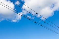鸟飞行释放到天空 免版税库存照片