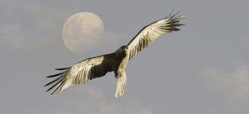 鸟飞行风筝吹口哨 库存照片