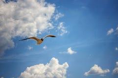 鸟飞行 库存照片