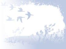 鸟飞行 库存例证