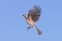 鸟飞行 库存图片