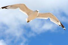 鸟飞行 免版税库存图片