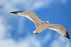 鸟飞行 免版税图库摄影
