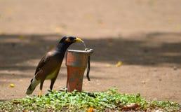 鸟饮用水 免版税图库摄影