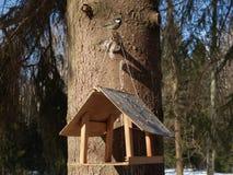 鸟饲养者和北美山雀在树 免版税图库摄影