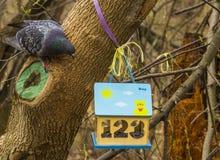 鸟饲养者,鸟舍在公园 免版税图库摄影