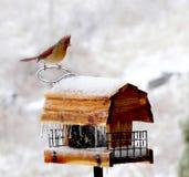 鸟馈电线冬天 免版税图库摄影