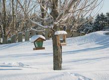 鸟馈电线冬天 库存照片