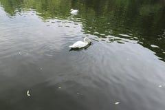 水鸟鸟 图库摄影