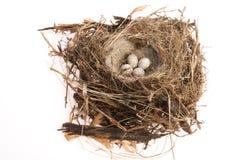 鸟鸡蛋细节在巢的 免版税库存图片