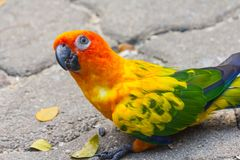 鸟鹦鹉美丽在动物园里 图库摄影