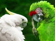 鸟鹦鹉 免版税库存图片