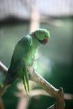 鸟鹦鹉 库存照片