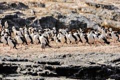 鸟,小猎犬海峡,乌斯怀亚,阿根廷 免版税图库摄影