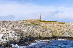 鸟,小猎犬海峡,乌斯怀亚,阿根廷 库存图片