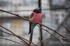 鸟,德国 免版税库存图片