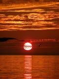 鸟,日落,海运1 免版税图库摄影