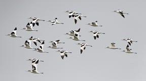 鸟,泰国,迁移鸟染色长嘴上弯的长脚鸟的鸟 免版税库存照片