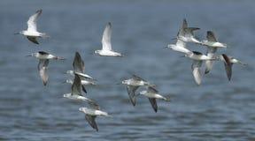 鸟,泰国,迁移鸟的鸟 库存照片