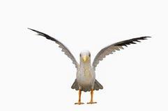 鸟,海鸥雕象 库存照片