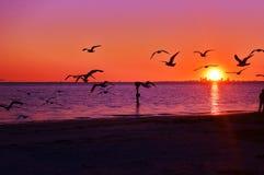 鸟,海洋,日落,铺沙此是生活!!! 免版税库存照片