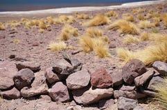 鸟,阿塔卡马沙漠,智利 图库摄影