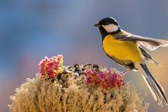 鸟,鸟饲养者,弄脏了五颜六色的背景 库存图片
