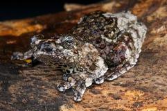 鸟滴下的青蛙 库存图片