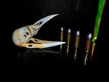 鸟死亡-禽流感 免版税库存照片