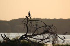 鸟类保护区 库存照片