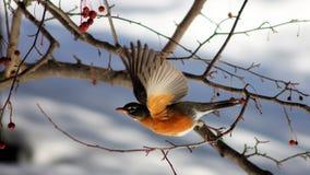 鸟离开 免版税库存照片