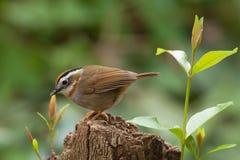 鸟寻求在树桩的食物 库存照片
