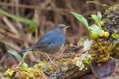 鸟寻求在树桩的食物 免版税库存图片