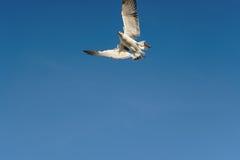 鸟轻碰在清楚的天空 图库摄影