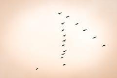 鸟类迁徙 免版税库存图片