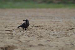 鸟质量 免版税库存照片