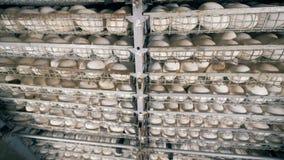 鸟`鸡蛋行,关闭 许多鸡蛋在农场的金属架子 股票视频