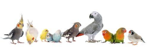 组鸟 免版税库存图片
