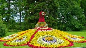 鸟` s火的一个五颜六色的花卉图在Mainau海岛  免版税库存照片