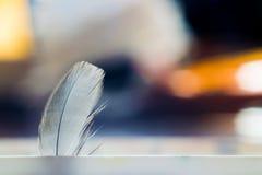 鸟` s羽毛快速在色的背景 宏指令 免版税库存照片