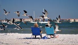 鸟fl低飞行的gulfport 库存图片