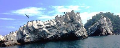 鸟Mochima国家公园海岛  委内瑞拉 库存图片