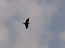 鸟silouette 图库摄影