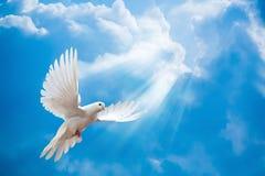 鸠在与大开的翼的天空中 免版税库存照片