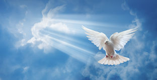 鸠在与大开的翼的天空中 库存图片