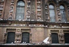 鸠在哈尔滨圣徒索菲娅大教堂,中国里 图库摄影